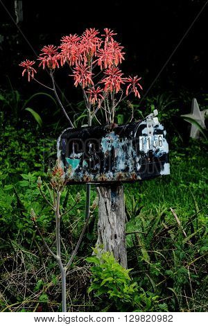 Rustic country mailbox with beautiful flowers looming over it.