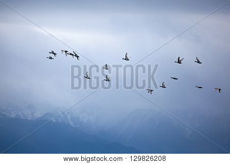 Flock Of Duck At Mountain