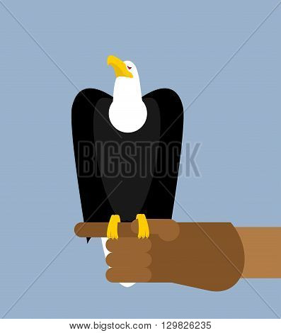 Eagle Hunting. Bald Eagle On His Arm. Trained Wild Bird Of Prey. Hawk Sitting On Glove