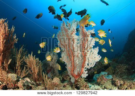 Coral and fish on reef in sea