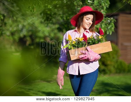 Woman wearing straw hat and gloves holding pot with blooming celosia flowers in the garden, gardening concept.