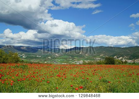 View of the little city of Oliana, in Alt Urgell county (Catalonia) with a field with puppies in the foreground