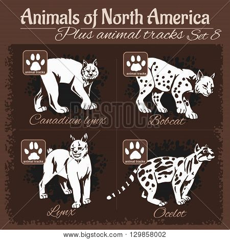 North America animals and animal tracks, footprints. Vector set.