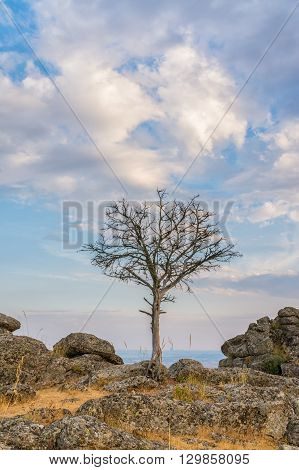 View of a solitary dry tree in the countryside with a colorful sunset at background