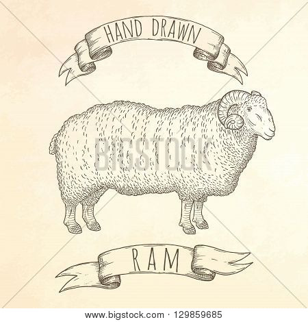 Ram hand drawn illustration. Vector EPS10 engraving.