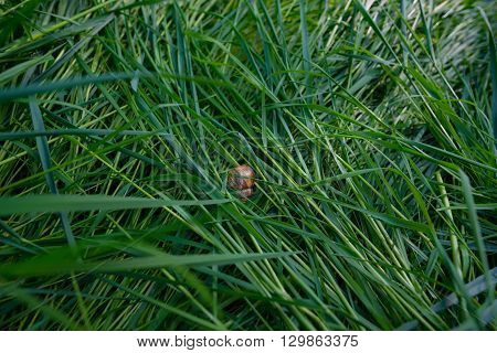Snail on the grass in the garden in Germany