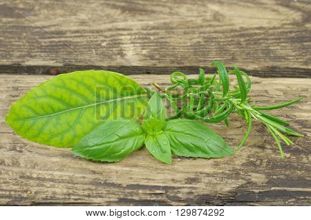 herb basi rosemary and laurel on wooden background