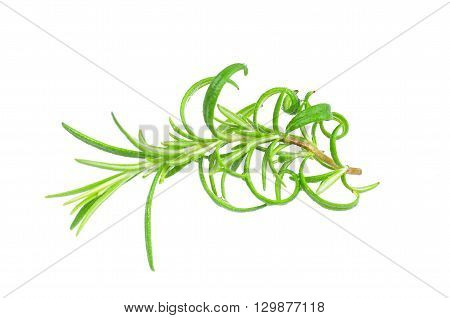 fresh herb rosemary on a white background