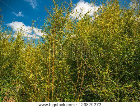 green bushes and blue sky in Germany on a sunny day