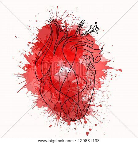 Vector sketch of the real heart of the red lines with watercolor splashes