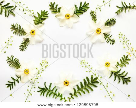 Fresh Narcissus Flowers Leaves And Hepherd's Purses On White Background With Copy Space. Flat Lay Fr