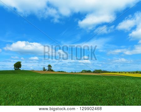 wavy agricultural landscape with canola field and beautiful sky