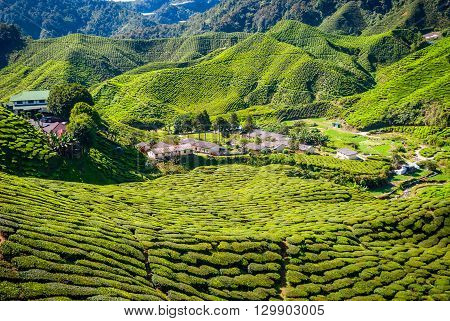 Village Between Tea Plantations, Cameron Highlands