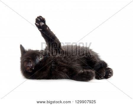 Black Kitten On White Background