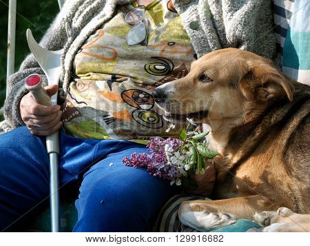 Dog, Hand of an old woman with a cane, crutch and a bouquet of flowers. Points. Guide-dog