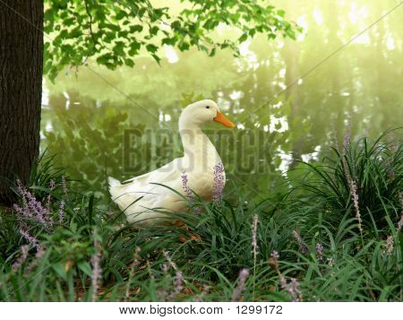 White Duck Among Purple Wildflowers