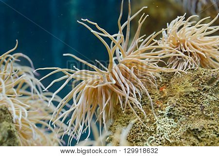 Sea anemone under water shot