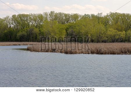 Wetland landscape during the spring in Minnesota