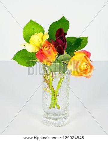 Miniature Rose Buds