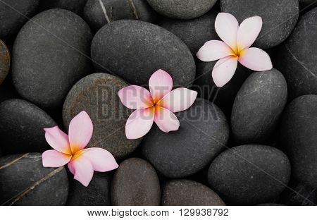 Black stones and three frangipani