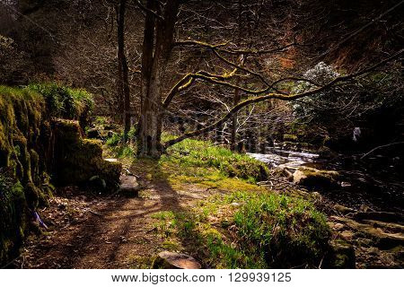 Hardcastle Crags Hebden Bridge West Yorkshire UK