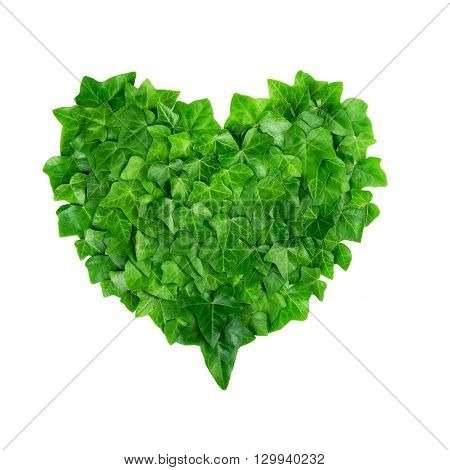Natural pattern from ivy leaves in a heart shape on white background. Nature protection concept.