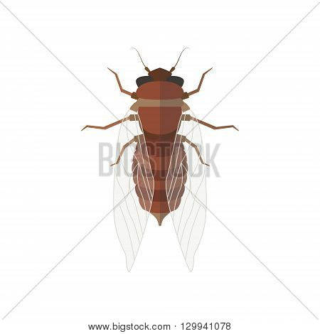 Cicada vector illustration. Isolated insect with close wings on white background
