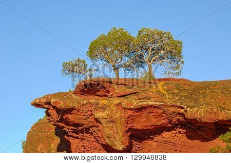 Three Pine Trees Growing On Top Of Red Rock.