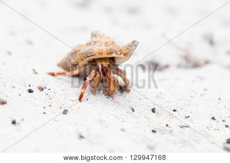 Close-up Of Orange Hermit Crab