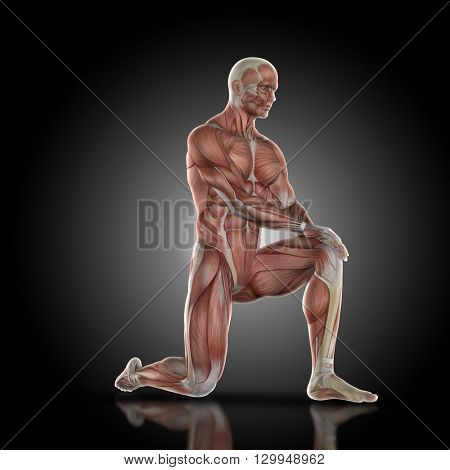 3D render of a medical figure bodybuilder with muscle map holding knee