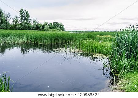 Nature Reserve Landscape. River and Bulrush reflecting in a River. Spring Trees in the Background.