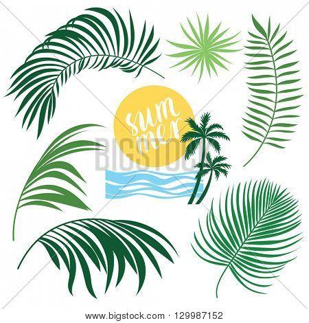 Tropic Collection, tropical leaves set, vector illustrations