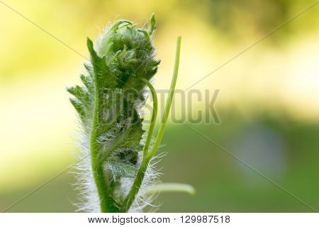 Close-up Of Watermelon Sprout