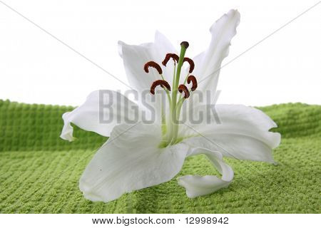 White lilia on green towel isolated