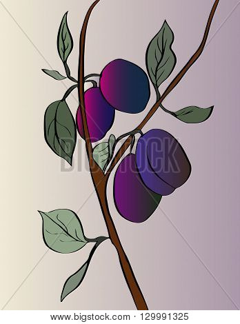 painted plum plum branch with berries on a purple gradient background