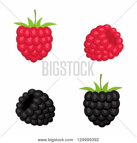 Berries of raspberry and blackberry isolated on white