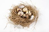 stock photo of bird-nest  - motley eggs at nest - JPG