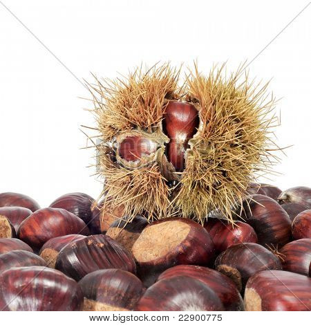some chestnuts, some in shell on a white background