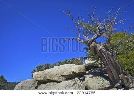 Tree Top San Jacinto