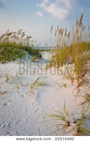 Footprints In The Sand Dunes Beach Scene