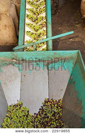 Olive Mill Conveyor Belt Feed