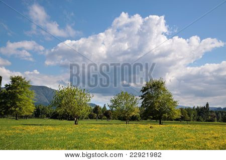 Green Landscape With Trees And Clouds