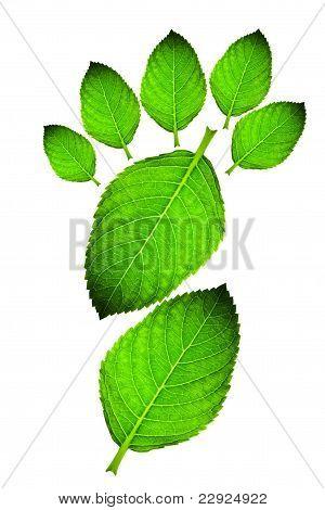 Beautiful color leaf footprint