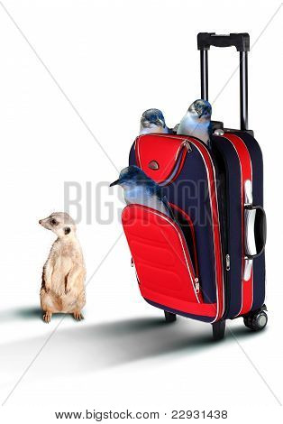 Red suitcase with pinguines inside