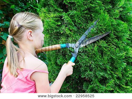 Girl Cuts Green Bush With Scissors