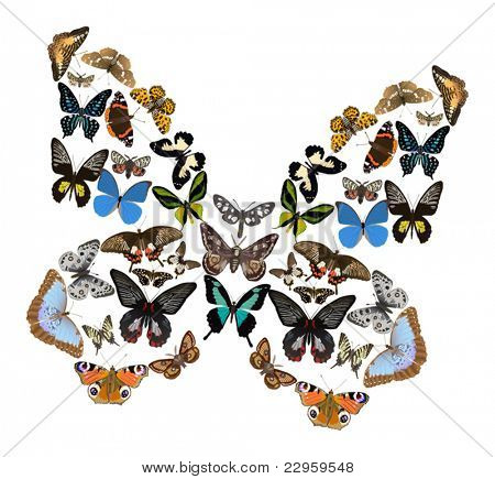 illustration with color butterflies isolated on white background