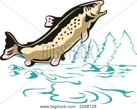 Trout Leaping Brown Trout