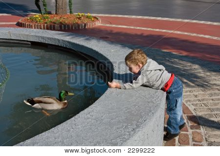 Baby Boy Feeding Duck