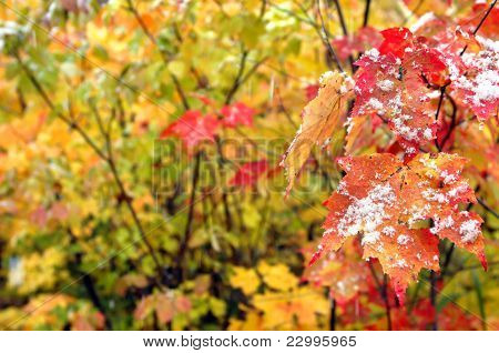 Background Beginning Of Winter