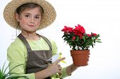 stock photo of flower pots  - A young florist - JPG